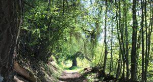 Sion - Veysonnaz 4 vallées